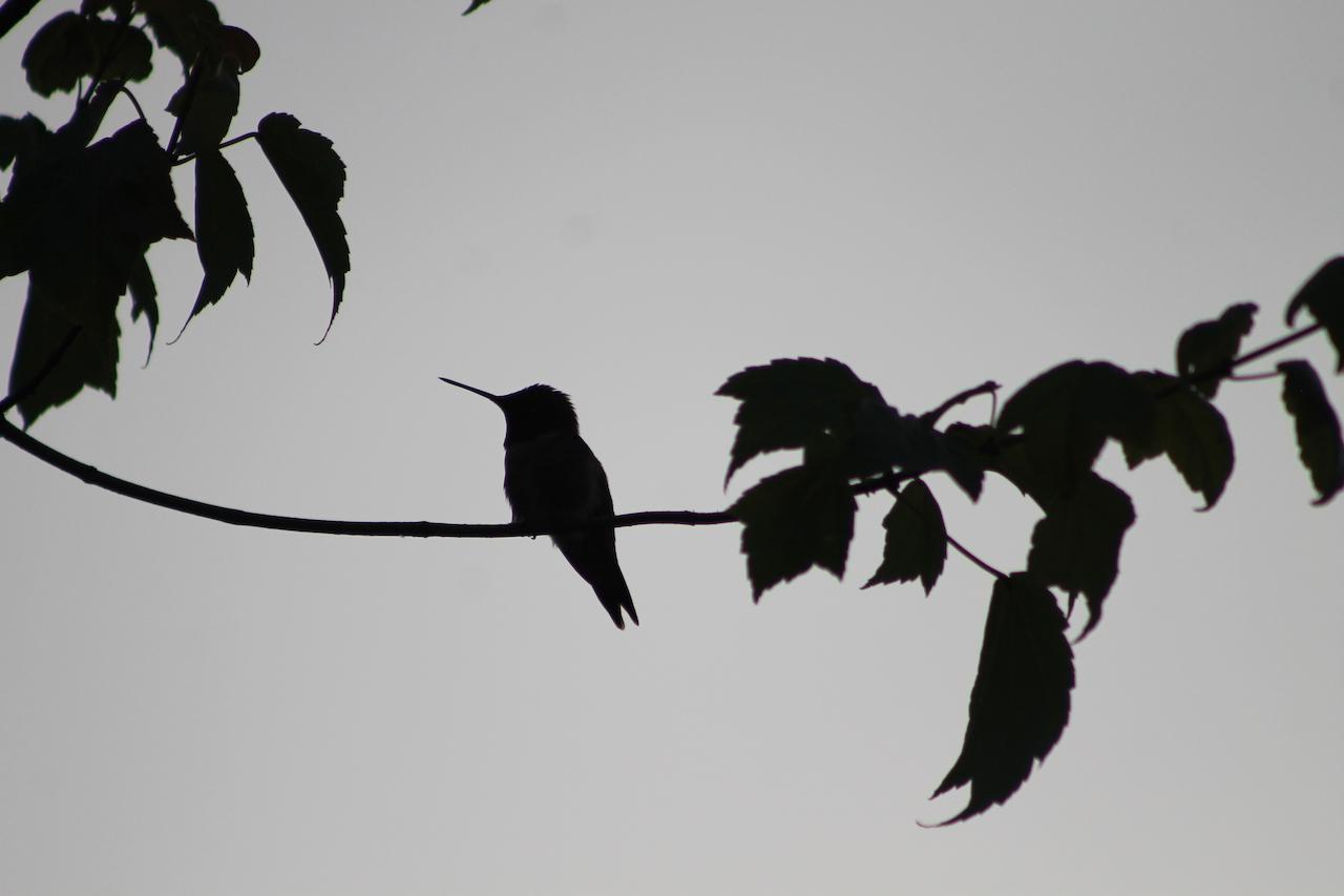 Summer bird (photo)